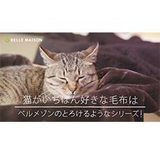 ae8ac6e839 2017年10月25日~猫がいちばん好きな毛布は ベルメゾンのとろけるようなシリーズ!~ WEB限定CM配信開始